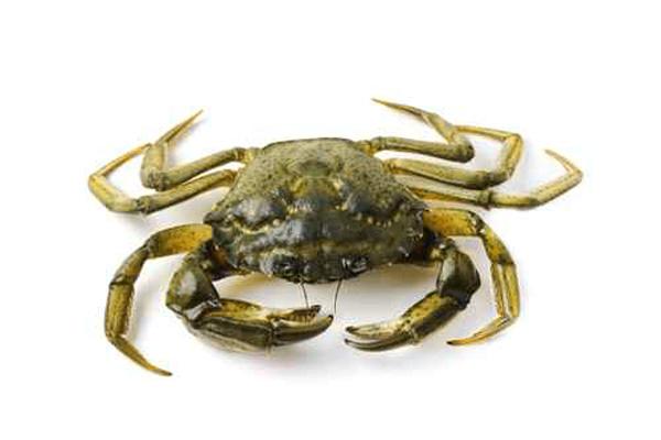 http://www.coquillagesbretagne.com/wordpress/wp-content/uploads/2014/09/crabe-vert.jpg